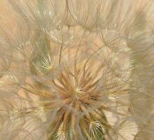 Dandelion by EmmaArvestad