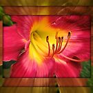 Lily Framed by Monnie Ryan