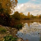 Autumn at East Harbor State Park by SRowe Art