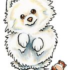Pomeranian Boo Boo by offleashart