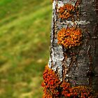 I'm lichen this by myraj