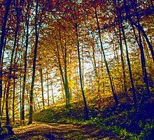Autumn in forrest by mayalenka