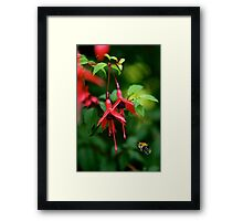 Wild Fuchsia at Loch Na Fooey (tall) Framed Print