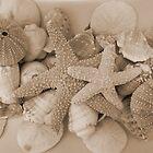 Sea Creatures 2 by Martha Medford