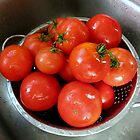 Fresh Pickin's.... by trueblvr