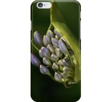 Agapanthus - Life Begins iPhone Case/Skin