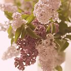 Lilacs #5 by Tracy Edgar