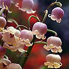 Lily of the Valley Rosea - Gippsland by Bev Pascoe
