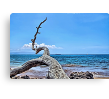 Maluaka Beach Canvas Print