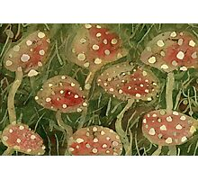 toadstools Photographic Print
