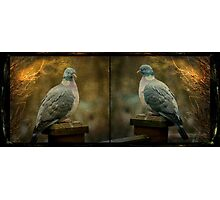 Book ends Photographic Print