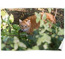 cat in the leaf Poster