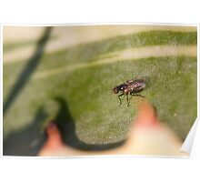 Fly on the leaf of agave Poster