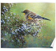 autumn juniper berries and yellow rumped warbler Poster