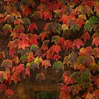 Autumn Most Colourful by Alexandra Lavizzari