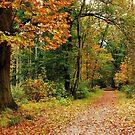 Walking on into autumn again by jchanders
