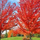 A Fall Color Explosion!! by jozi1