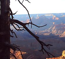 GRAND CANYON CLIFF by WildeEntertain