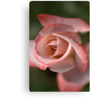 The Eye Of The Rose Canvas Print