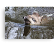 Swimming Tapir Canvas Print