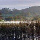 Esthwaite Reeds by VoluntaryRanger