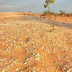 broome sand dune tree by Elliot62