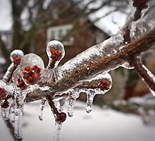 Ice storm by Koalka