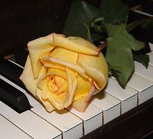 A Song From A Rose by lornakay