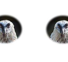 Bearded Vulture / Bartgeier by Thomas F. Gehrke