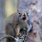 Chatter Box - Red Squirrel by Jim Cumming