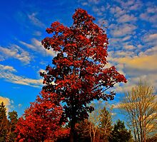 Autumn Tree by ajnelson