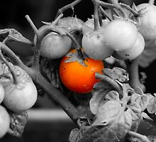 Macro photo of cherry tomatoes in an English garden - Black and White by Luke Farmer