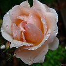 Peaches'n cream by MarianBendeth