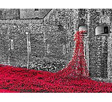 Cascade Of Poppies Photographic Print