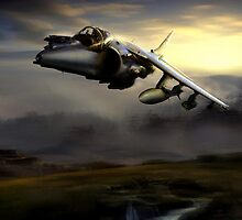 Low level harrier by Bob Martin
