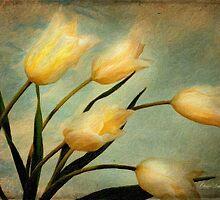 Dutch Tulips by Chris Armytage™