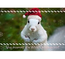 White squirrel Christmas Photographic Print