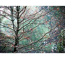 The Aura of Trees Photographic Print