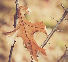 Hello November,  by Debbra Obertanec