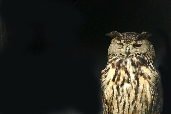 Owl in the night by Arie Koene