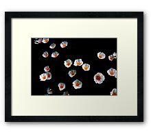 Flower Shower 8511 Framed Print