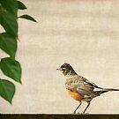 Robin  by Rebecca Cozart