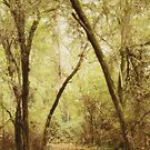 Forest Path by Rebecca Cozart