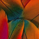 Parrot Feathers (orange detail) by BadBehaviour