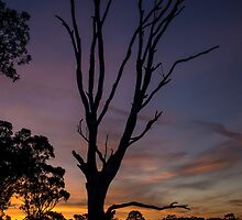 Tree Sunset by Joel Bramley