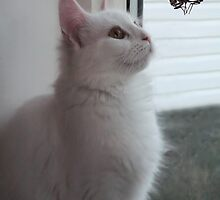 WONDERING..NOW HOW DID HE GET IN HERE? CAT & UNWANTED GUESTS > PICTURE AND OR CARD by ✿✿ Bonita ✿✿ ђєℓℓσ