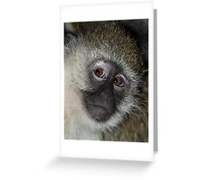 The Eyes Have It! Black-faced Vervet Monkey, Kenya  Greeting Card