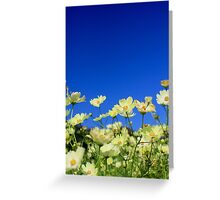 Lovely Yellow Cosmos Clear Blue Sky Flower Field Greeting Card