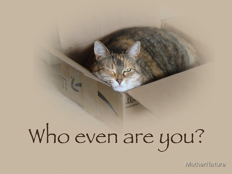 Who Even Are You - Lily the Cat by MotherNature