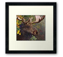 bull moose portrait amid aspen and spruce Framed Print